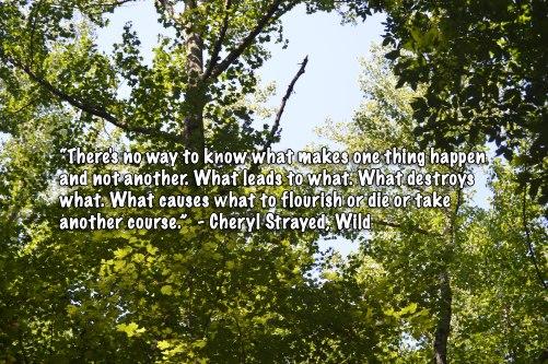 Wild-quote