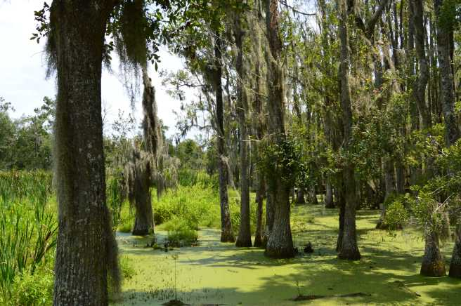 Magnolia Swamp Tour