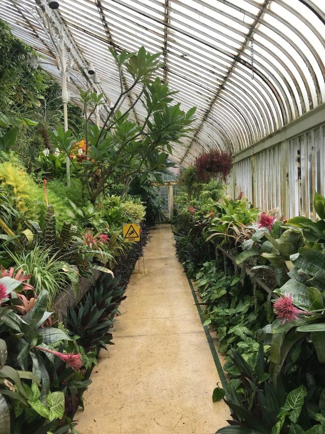 Inside the Palm House Botanical Gardens Belfast